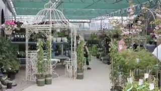 Virtual Tour of The Glasshouse Nursery & Garden Center