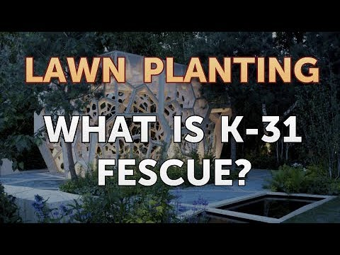 , title : 'What Is K-31 Fescue?