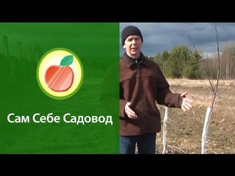Ранневесеннее опрыскивание сада карбамидом (мочевиной)