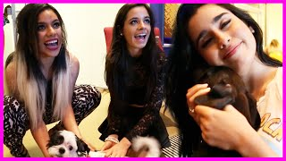 Puppy Party With Fifth Harmony - Fifth Harmony Takeover Ep. 48