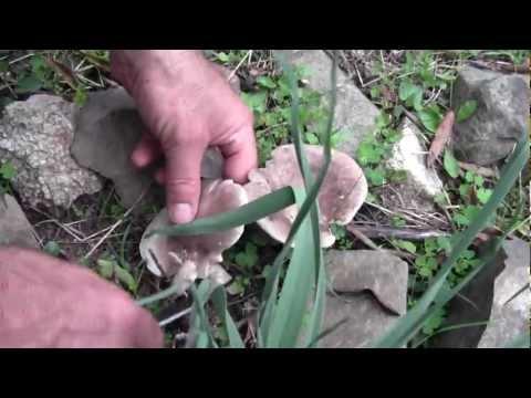 Come trattare un fungo del milkwoman di una cavità orale