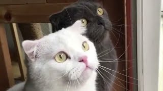 Смешные приколы с животными Смешные собаки и Прикольные коты Калейдоскоп за 13 11 2018