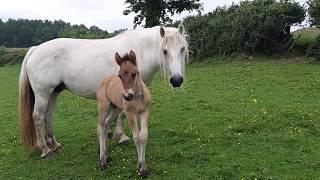 Kyla & foal 040618