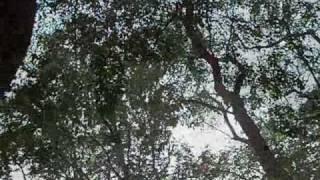 Video Vodou život prekvitá