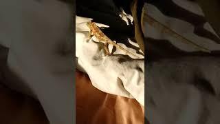 A Chameleons Dream
