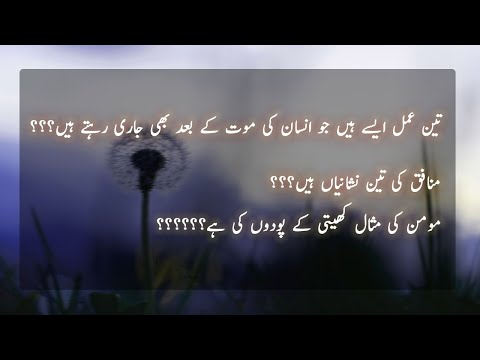 Heart Touching Quotes In Urdu | Golden Words | Whatsapp Status Video | Islamic Quotes
