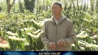 GIẢI PHÁP TƯỚI CHO CAPHE -NETAFIM  VIỆT NAM (KHANG THỊNH)