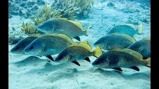 Какая рыба ловиться в феврале на черном море
