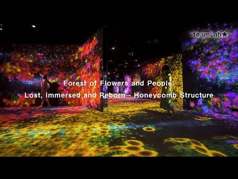 Forest of Flowers and People  Lost, Immersed and Reborn   Honeycomb Structure
