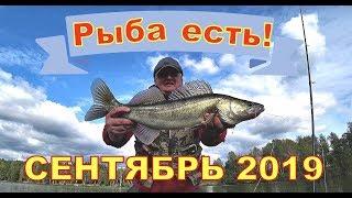 Где лучшая рыбалка в сентябре на спиннинг