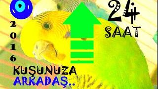 ❤KUŞLAR COŞTU👆BAYILDI😁Muhabbet Kuşu Sesi Uzun #24saat #muhabbet Kuşu Sesi #24saatlik #24