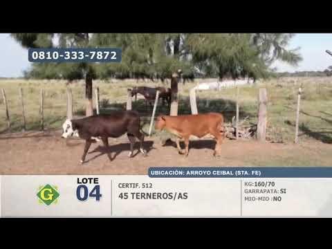 Lote Terneros/as en Arroyo Ceibal (Santa Fé)