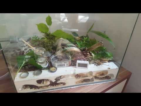 Ameisenfarm - Camponotus ligniperda #24 - Neue Farm!