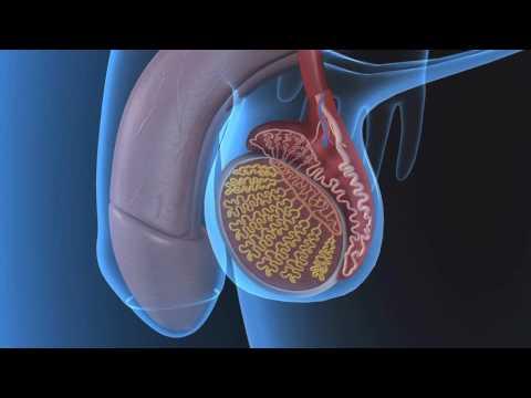 Лечение аиром аденомы простаты