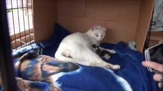 Sweetpea the rescue cat gives birth