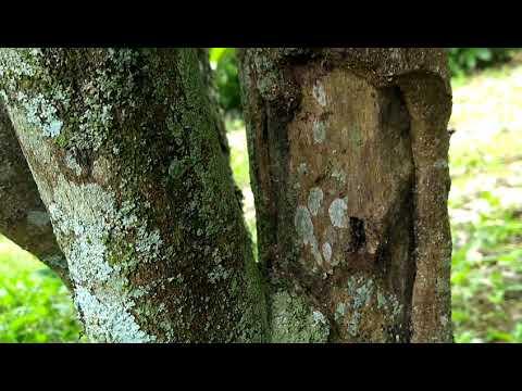 Que medicina é aplicada em uns pregos de fungo