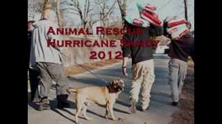 I AM by Steve Perry (Lyrics overlay) feat. Hurricane Sandy lost pets