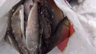 Зимняя рыбалка на енисее в красноярске