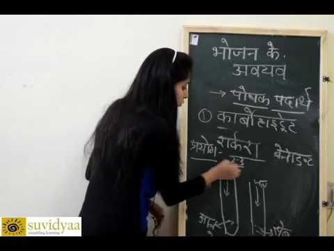 Components of Food - Carbohydrate,Proteins and Fats[Hindi]