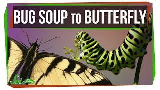 How Does Bug Soup Become a Butterfly?