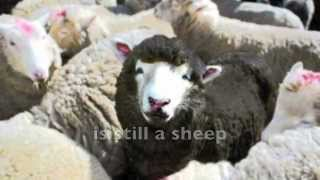 """The Choice is Yours! (Alternative for mobile devices) SLAVE SERMONS (Episode 39) """"Black Sheep"""""""