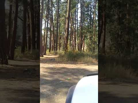 Video Of S'Ocholis Campground (historical), OR