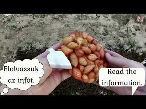 Milyen tabletta a paraziták számára