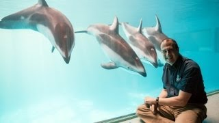 How Do You Become A Dolphin Trainer?
