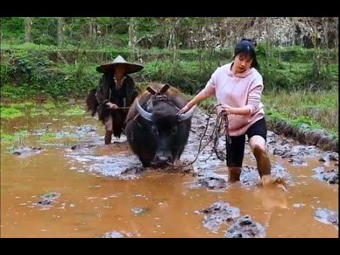 農村女子吃一百碗紅燒肉