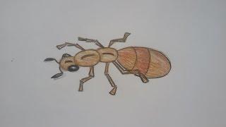 Смотреть онлайн Как поэтапно рисовать муравья
