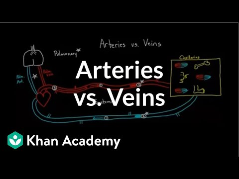 Arteries vs  veins - what's the difference? (video) | Khan