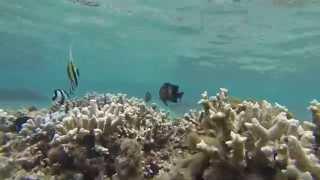 preview picture of video 'lagon de l'ermitage st gilles les bains REUNION'