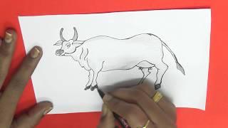 Cow Pongal Drawing 免费在线视频最佳电影电视节目 Viveos Net