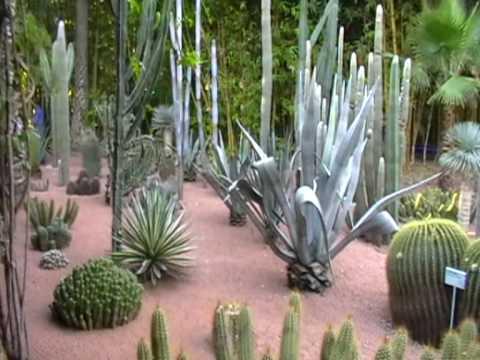 Beelden uit de Jardin Majorelle