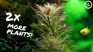 ProTip: Jak uzyskać 2x więcej sadzonek z koszyczka