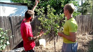HOW TO HEAL A SICK FRUIT TREE | Gardening Tips