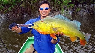preview picture of video 'Pescaria na Amazônia - Caracarai - Tucunarés Açu 22Lbs / 10kg'