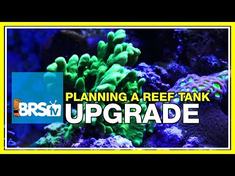 Week 52: Planning a reef tank upgrade, plus a look back at the BRS160 | 52 Weeks of Reefing #BRS160