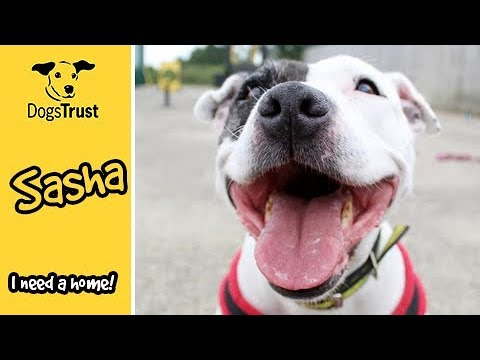 Sasha is a clever, super friendly girl l Dogs Trust Leeds