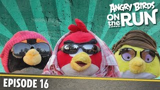 Angry Birds On The Run | Fashion Show   S1 Ep16