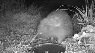 Wildlife Trail Camera - 15.4.2019