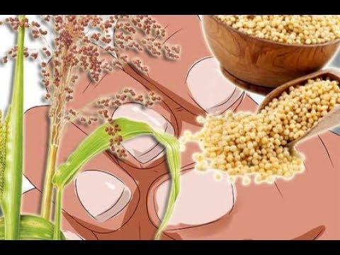 Braunhirse glutenfreie Balaststoffe für Nägel Haut und Haar