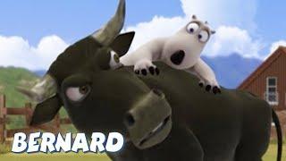 Bernard Bear   Bullfighter AND MORE   30 min Compilation   Cartoons for Children