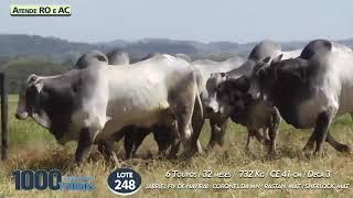 6  touros Nelore PO  (Atende RO e AC)