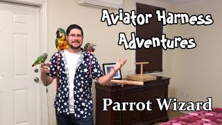 What You Can Do With an Aviator Harness for Your Parrot