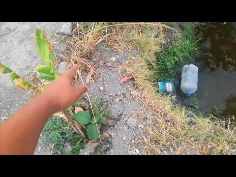Sale agua del estanque