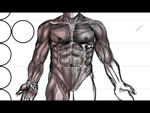 Miofibroz les muscles