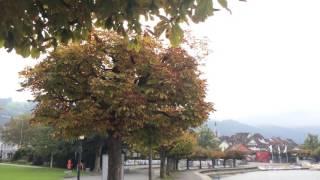 スイス発 秋のツーク湖沿いを散歩【スイス情報.com】