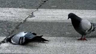 Poisoning Pigeons in the Park Tom Lehrer 1959