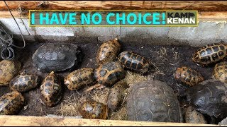 Cold Weather Elongated Tortoise Storage